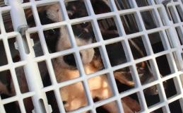 Saúde começará a cadastrar cachorras e gatas para castração em Tamarana