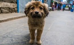 Município irá bancar castração de 120 fêmeas de cães e gatos de Tamarana