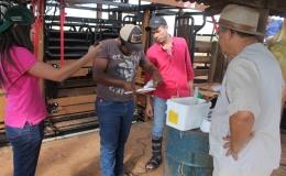 Contra êxodo rural, jovens produtores de Tamarana buscam capacitação