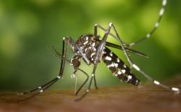 Ocorrência de focos de dengue em Tamarana se mantém abaixo de 2%