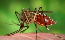 Período chuvoso começa e infestação de dengue aumenta em Tamarana