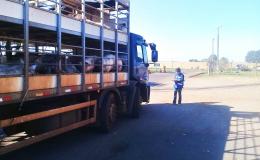Produtor rural tem mais facilidade para emitir GTA animal
